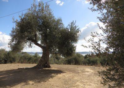 Umbrië Meer van Trasimeno, Isola Maggiore (2)